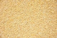 谷物被去壳的小米珍珠 免版税图库摄影