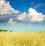 谷物领域横向 免版税库存照片
