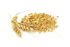 谷物麦子 库存图片