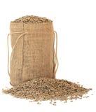 谷物黑麦 免版税库存图片