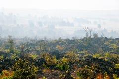 谷的有雾的横向 免版税库存图片