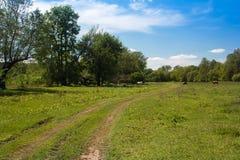 谷的风景,小径,树,天空和吃草母牛 免版税库存图片