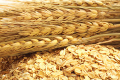 谷粒整个燕麦片 库存照片