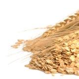 谷粒整个燕麦片 免版税图库摄影