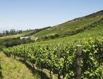谷葡萄园在开普敦,南非 图库摄影