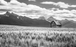 谷仓和大麦 库存图片