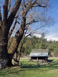 谷仓和树。 库存照片