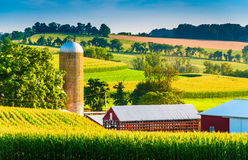 谷仓和筒仓在一个农场在农村约克县,宾夕法尼亚 图库摄影