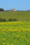 谷仓和野花在草甸 免版税库存图片
