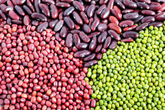 绿豆、小豆和红色扁豆 免版税图库摄影
