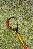 绿豆和匙子 免版税库存图片