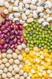 豆和扁豆品种IV 库存图片