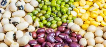 豆和扁豆品种v 免版税库存图片