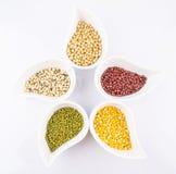豆和扁豆品种VI 免版税库存图片