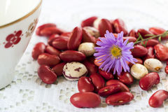 豆和花 库存照片