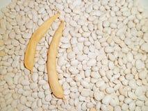 豆和荚 免版税库存图片