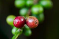 豆咖啡工厂 免版税图库摄影