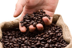豆咖啡测试 免版税库存照片