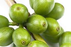 豆咖啡绿色 免版税库存照片