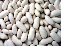 豆扁豆白色 库存照片