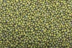 绿豆收获  库存图片