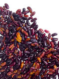 豆收集红色 免版税图库摄影