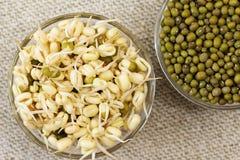 绿豆新芽和干燥的绿豆 免版税库存照片