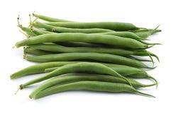 豆灌木 免版税图库摄影