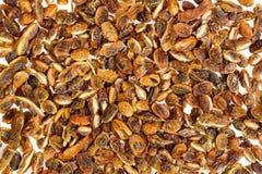 豆烘干了japonica槐属 抽象背景 免版税库存图片