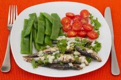 豆煮沸了油煎的绿色沙丁鱼 免版税库存图片