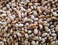 豆种子 免版税图库摄影