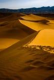 豆科灌木在日出-死亡谷国家公园的沙丘 免版税库存照片