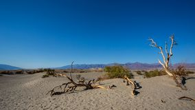 豆科灌木平的沙丘在死亡谷 免版税库存照片