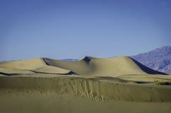豆科灌木平的沙丘,加利福尼亚 免版税库存图片