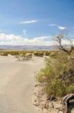 豆科灌木平的沙丘 免版税库存图片