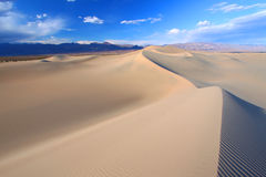 豆科灌木平面的沙丘 免版税库存图片