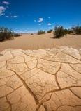 豆科灌木沙丘在死亡谷烘干了黏土细节 免版税库存图片
