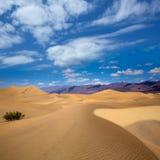 豆科灌木沙丘沙漠在死亡谷国家公园 免版税库存照片