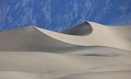 豆科灌木沙丘  库存照片