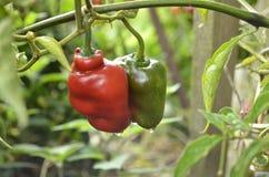 豆红萝卜花椰菜食物自然字符串蔬菜 库存照片