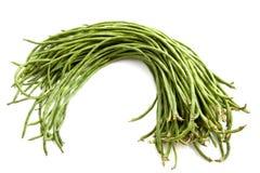豆绿色长 免版税库存图片