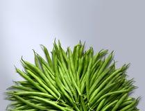 豆绿色 图库摄影