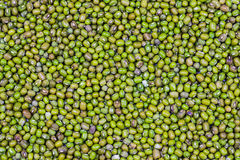 豆绿色 免版税库存图片