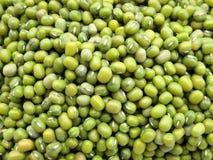 豆绿色mung 免版税图库摄影