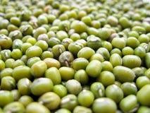 豆绿色mung 免版税库存照片