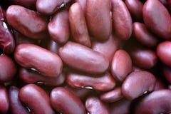 豆肾脏红色 免版税库存图片
