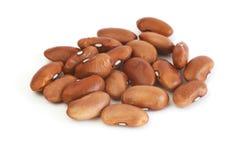 豆肾脏红色 库存图片