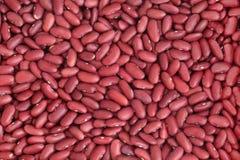 豆肾脏 库存照片