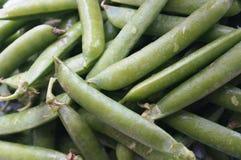 绿豆荚 免版税库存图片