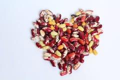 豆被玷污的肾脏红色 库存照片